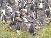 macquarie island.m4v