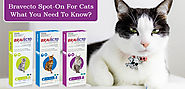 Buy Bravecto Spot On Flea & Tick Treatments For Cats