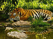 Sundarban Jungle Safari, Land of Tigers