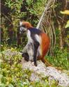 Tana River Primate Reserve - Wikipedia, the free encyclopedia