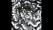 (202) Black and white spun reverse flower dip / Spinn technique / Acrylic pouring / Fluid art