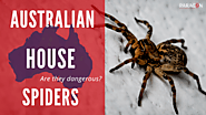 House Spiders - Are all spiders dangerous in Australia? -