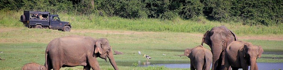 Headline for Most Thrilling Wildlife Safaris in Sri Lanka- Explore the wilderness