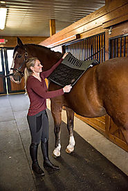 Saddle Pads and Saddle Accessories
