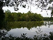 Go back to nature at Sungei Buloh Wetland Reserve