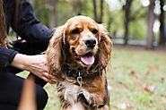 Answers to All Your Questions About Immunity for Dogs
