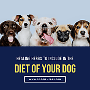 Healing Herbs to Include in the Diet of Your Dog