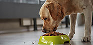 5 Reasons why you should feed supplements to your dog sider