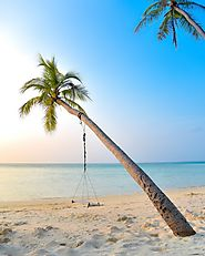 Swing from a Coconut Tree