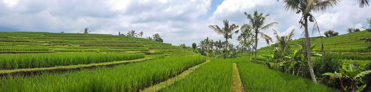 Headline for 10 Must-Visit Attractions in Ubud, Bali - Stunning Attractions in Ubud Bali