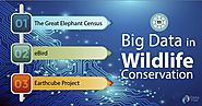 Big Data is Helping in Wildlife Conservation - DataFlair