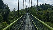 Brave the MacRitchie Treetop Walk