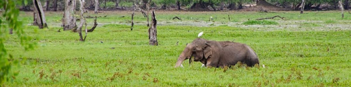 Headline for Things You Should Know Before Traveling to Yala, Sri Lanka - The Best Natural Habitat