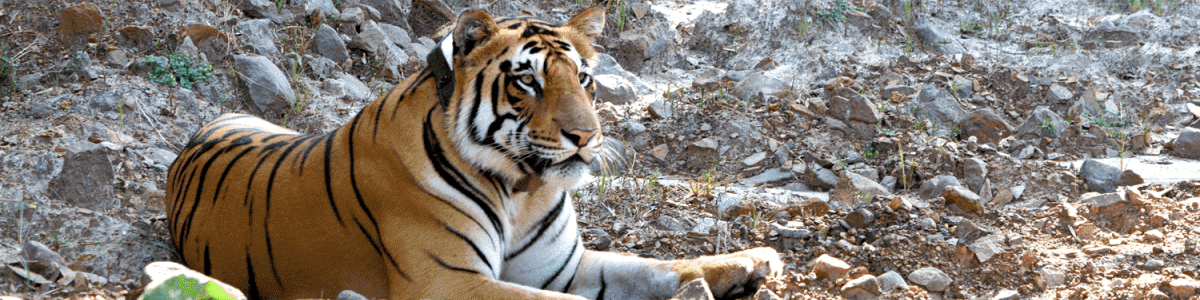 Headline for Top 5 Resorts In Tadoba National Park
