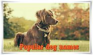 Popular Dog Names - The Ultimate List [500+ Awesome Names]