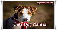 Cutest Dog Names for Girls and Boys