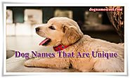 Male and Female Dog Names that are Unique
