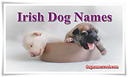 Irish Dog Names for Male and Female
