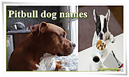 Awesome Pitbull names for Badass Dogs