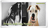 French Bulldog Names- Choose the Perfect name for Male and Female Bulldogs