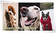 Disney Dog Names- Boy & Girl Names for Disney Dogs and Their Meanings