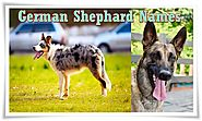 German Shephard Dog Names and Their Meanings (Male and Female)