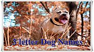 3 Letter Dog Names - Male and Female [Awesome Names]