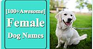 100 Female Dog Names as Adorable as Your Girl Pup