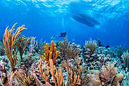 Scuba Diving and Snorkeling Adventures In The Cayman Islands