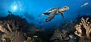 Best Winter Dive N Stay Packages - Ocean Frontiers, Grand Cayman