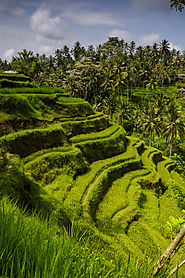 Tegallalang or Jatiluwih rice terraces