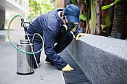 An Innovative Pest Control solution to Resolve your Pest Problem