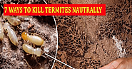 Tips For Termite Control And It Is Commonly Not Used By People