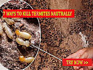 How We Attracting The Pest And You Have To Know About What Do And Don't
