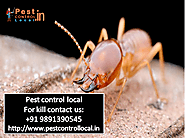Few Points To Prevent Pest Ultimately