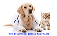 Pet Insurance Basics and Facts - Pet Files