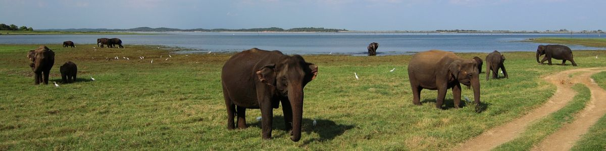 Headline for 11 wildlife national parks in Sri Lanka – adventurous excursions