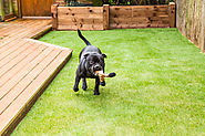 Your puppy will be super happy with artificial grass in your backyard