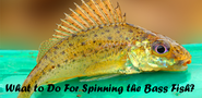 What to Do For Spinning the Bass Fish?