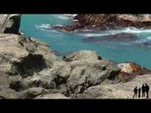 Blenheim to Kaikoura - New Zealand HD