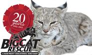 About BCR - Big Cat Rescue