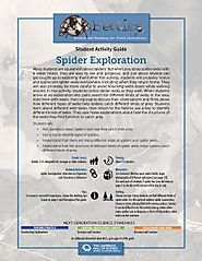 Spider Exploration - Beetles Project Focused Exploration