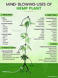 Mind-blowing Uses of Hemp Plant