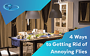 4 Ways to Getting Rid of Annoying Flies - CLEAN HOUSE INC