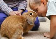 Rabbits make good pets for kids