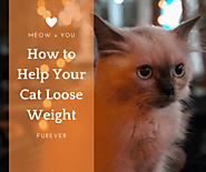 How to Help Your Cat Loose Weight