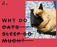 Why Do Cats Sleep So Much? Sleeping Facts About Cats