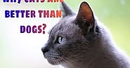 10 reasons why cats are better than dogs? | Pets World Today