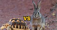Rabbit and the tortoise story | Moral stories for kids | Pets World Today