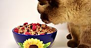Can cats eat dog food? Answer will surprise you | PWT | Pets World Today